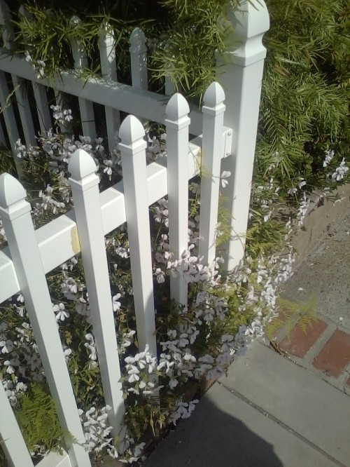 Sweet picket fence